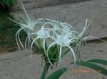 1_omar_ali_flower_taman-negara-39