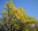Autumn_2009