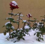 First_snow_2013