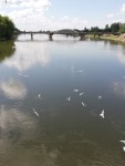 Pic_7_Piestany