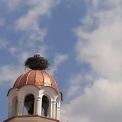 Storks_2